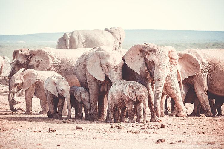 Eine Gruppe von Elefanten in den verschiedensten Größen.