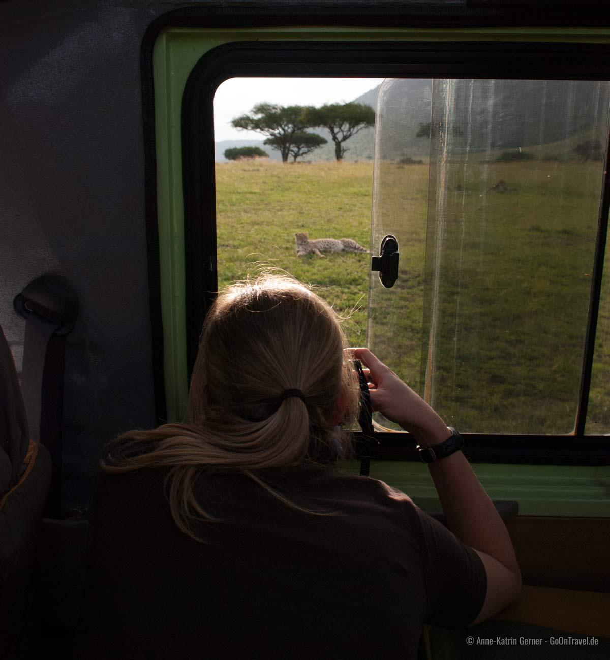 Fotografieren auf Safari: den Gepard im Blick