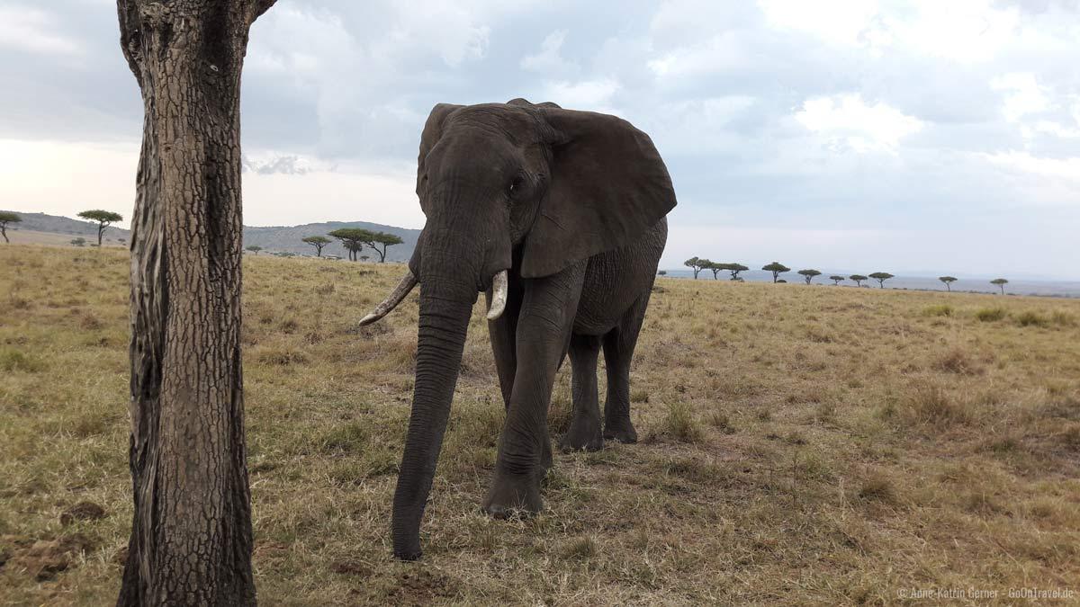 neugieriger Elefant, aufgenommen mit einem Smartphone