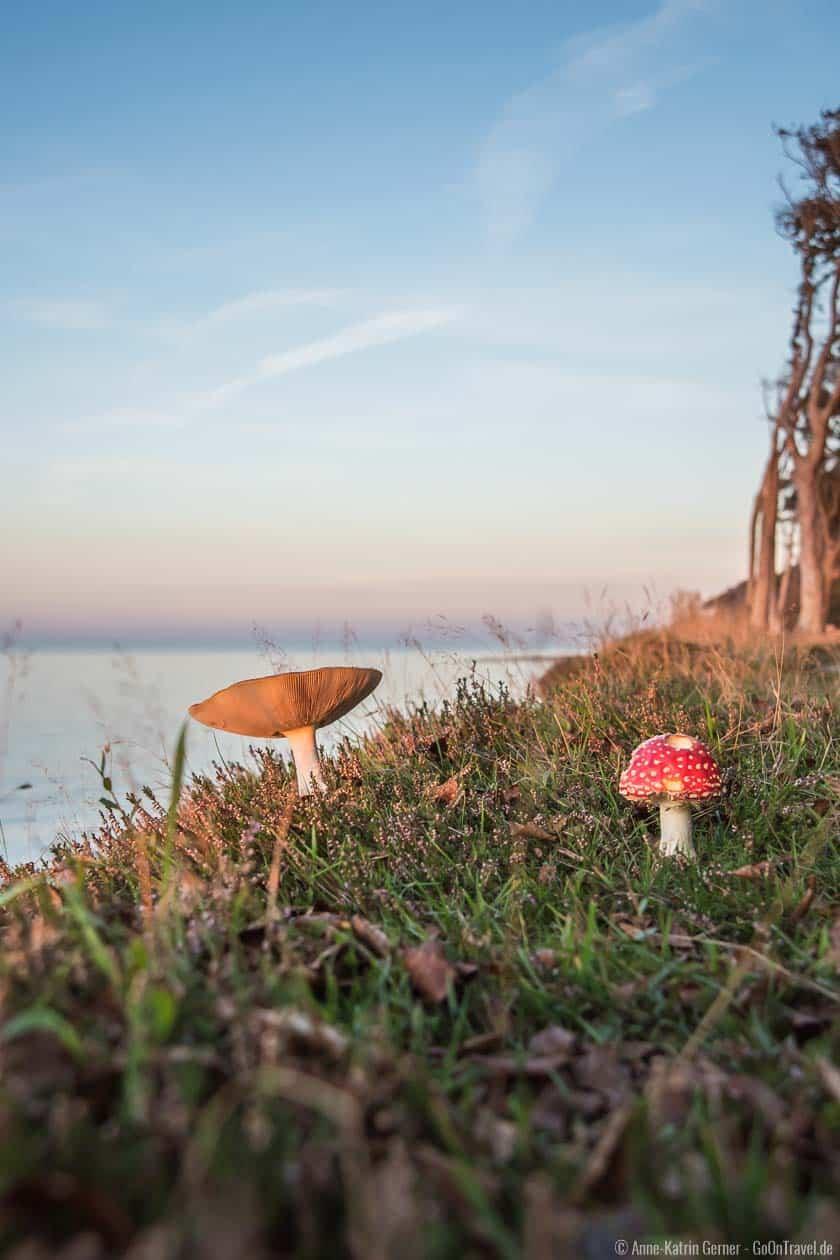 Herbst im Gespensterwald in Nienhagen
