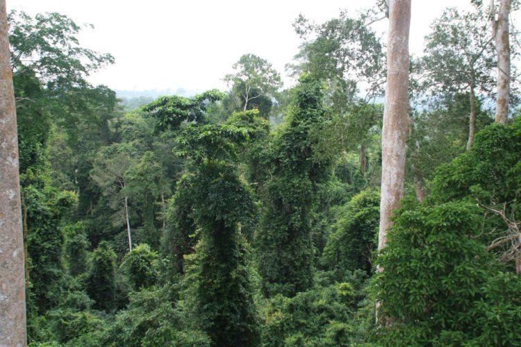Atemraubender Blick in den Regenwald von Ghana!
