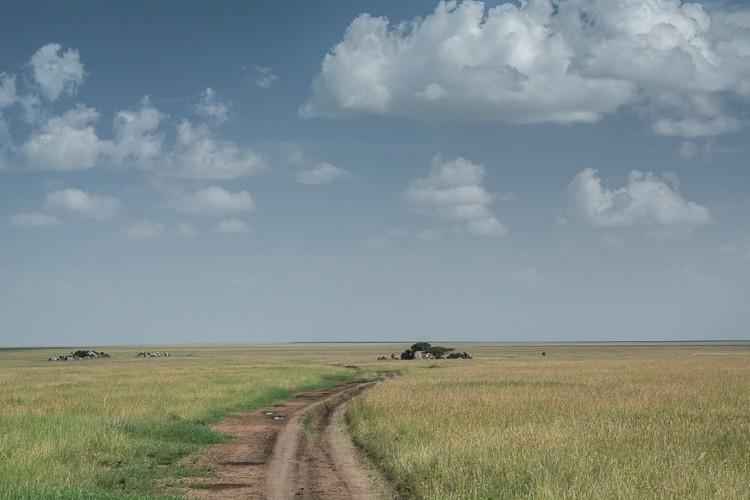 In der Zentral-Serengeti