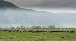 Ngorongoro Krater und Schutzgebiet- Tansanias 8. Weltwunder