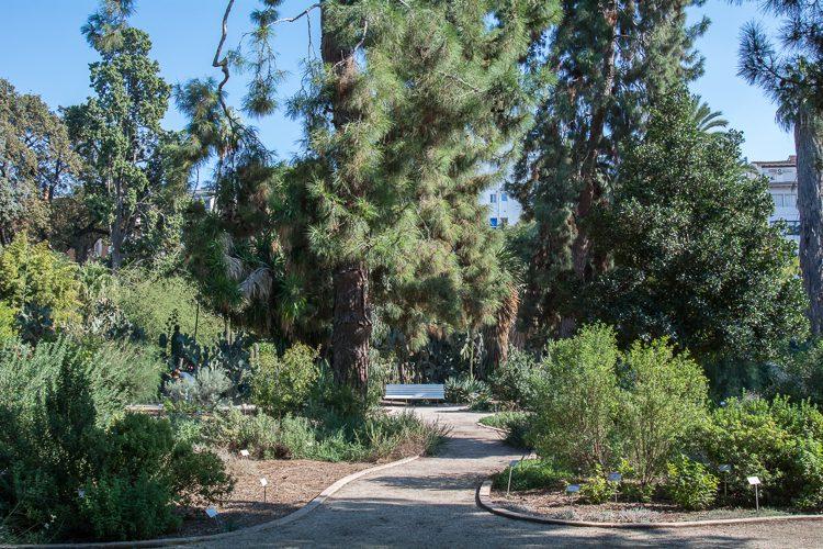 im Botanischen Garten von Valencia