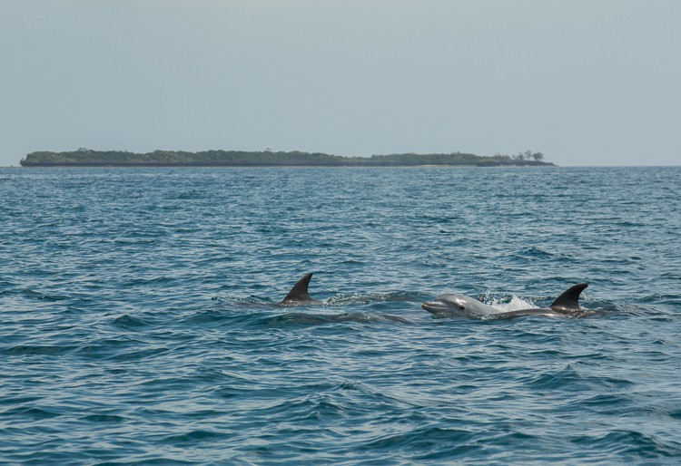 Delfine vor Wasini Island