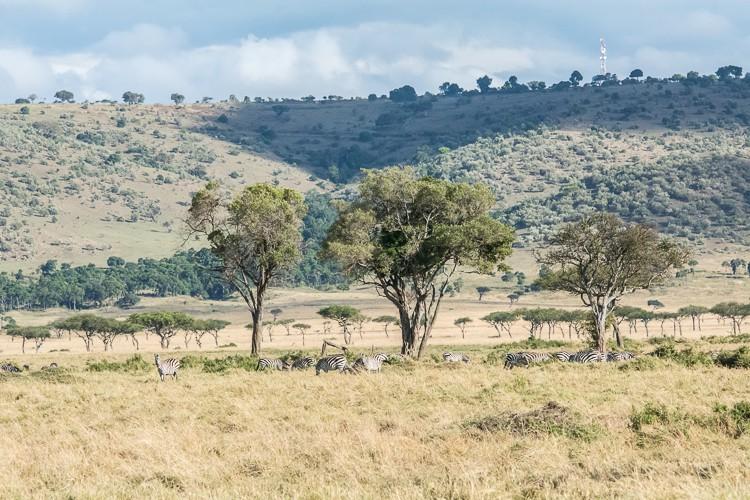 mehr als nur Filmkulisse - die Maasai Mara