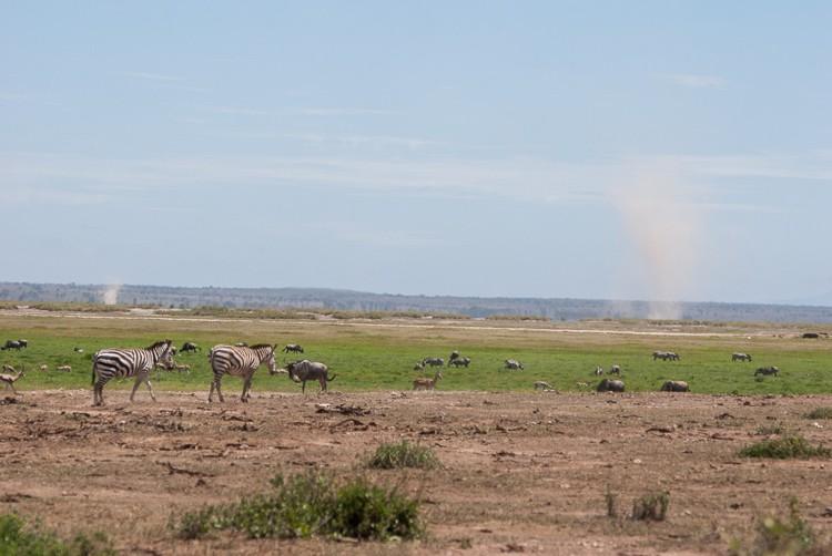 Windhosen über Amboseli