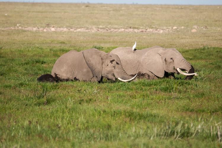 Elefanten im Sumpf