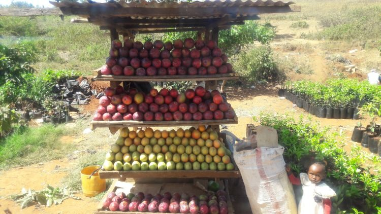 Mangostand am Straßenrand in Kenia