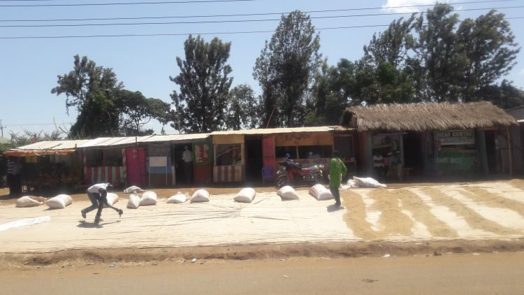 Reis wird am Straßenrand getrocknet