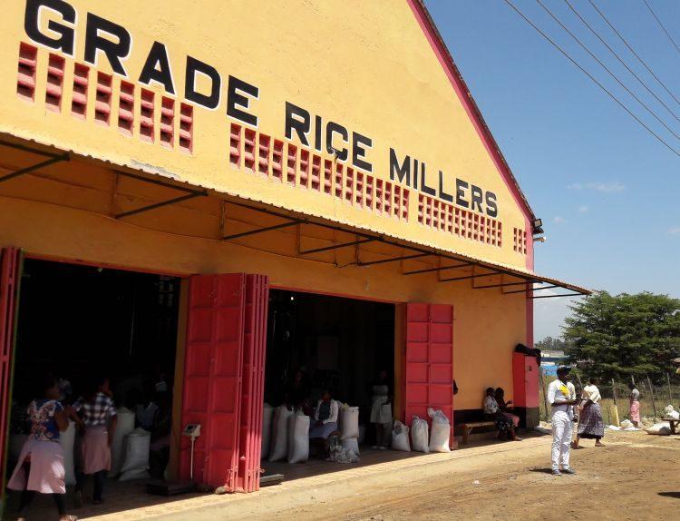 Reismühle in der Nähe des Mount Kenya