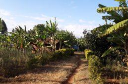 Zu Gast bei kenianischen Freunden am Mount Kenya