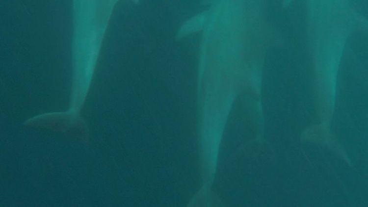 Zwischen Delfinen