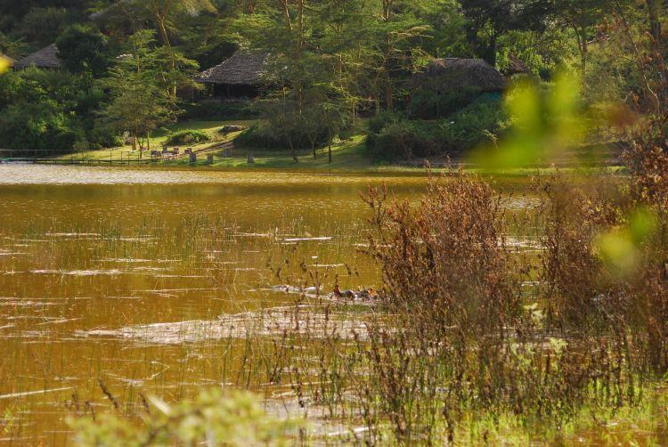 """Finde das """"Kiboko"""" (Swahili für Flusspferd)!"""