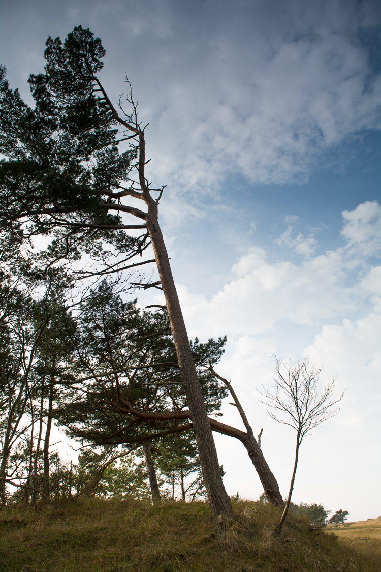 Aus dem Wald an die Ostsee