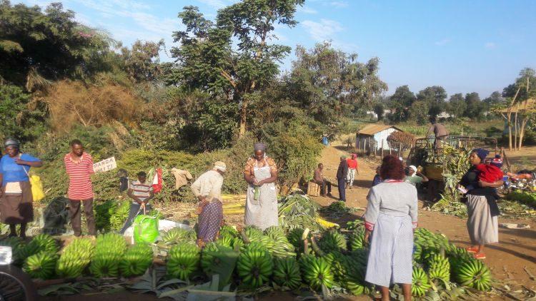 kenianischer Markt mit Kochbananen