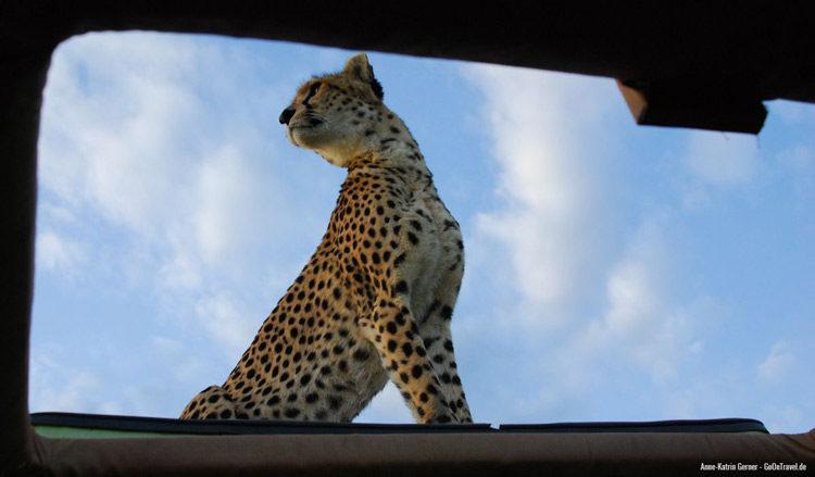 Maleika auf dem Autodach