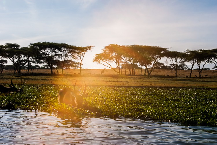 Lake Naivasha Szenerie