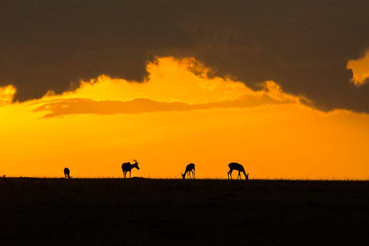 Sonnenuntergang Maasai Mara
