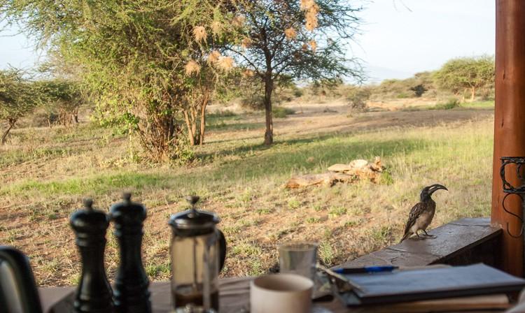 Frühstück mit Nashornvogel