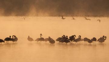 Safari im Lake Nakuru Nationalpark