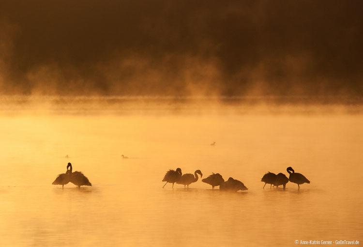 Morgenstimmung Lake Nakuru