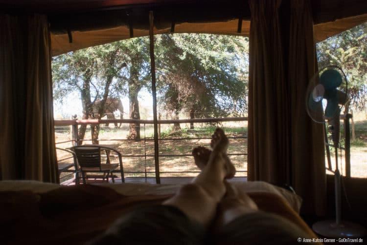 vom Bett aus Elefanten beobachten