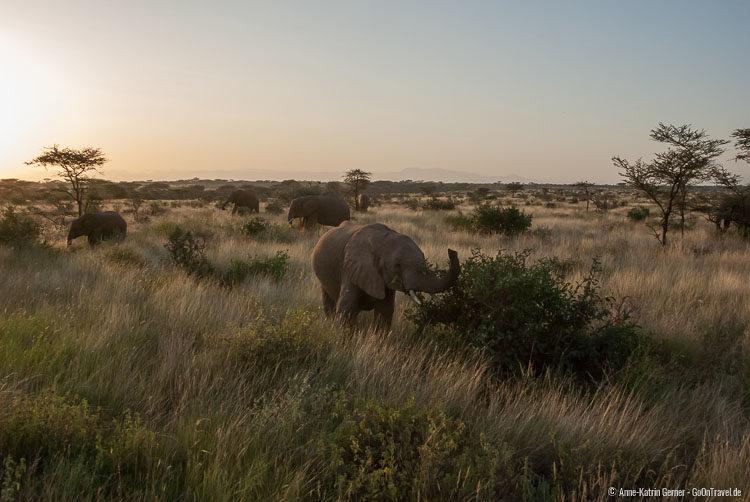 Elefantenherde im Morgenlicht