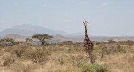 Safari Geheimtipp: Samburu und Buffalo Springs Nationalreservat