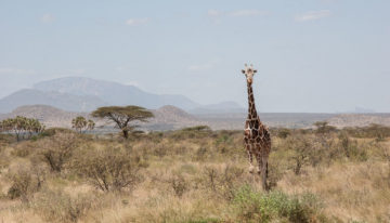 Safari Geheimtipp: Samburu und Buffalo Springs Nationalreservat