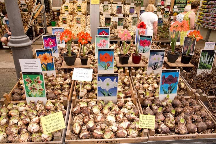 Auf dem Blumenmarkt gibt es eine Vielfalt an Blumenzwiebeln