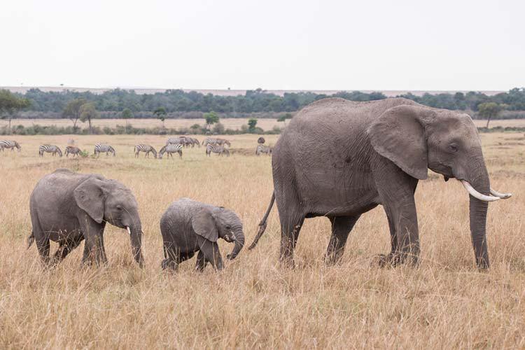 Einfach nur süß, ein kleiner Elefant mit seiner Familie