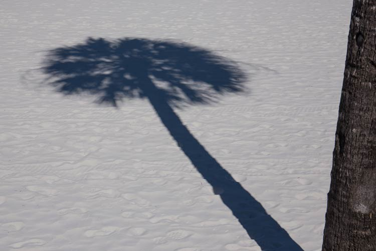 Palmenschatten am Clearwater Beach