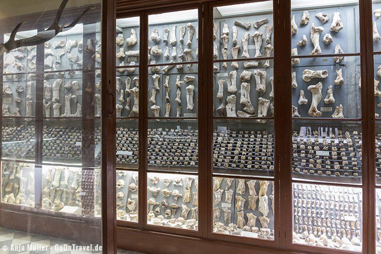 Das Museum bei Dalam Cave mit vielen fossilen Fundstücken