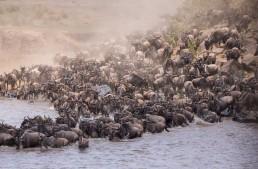 Unsere besten Erlebnisse in der Maasai Mara