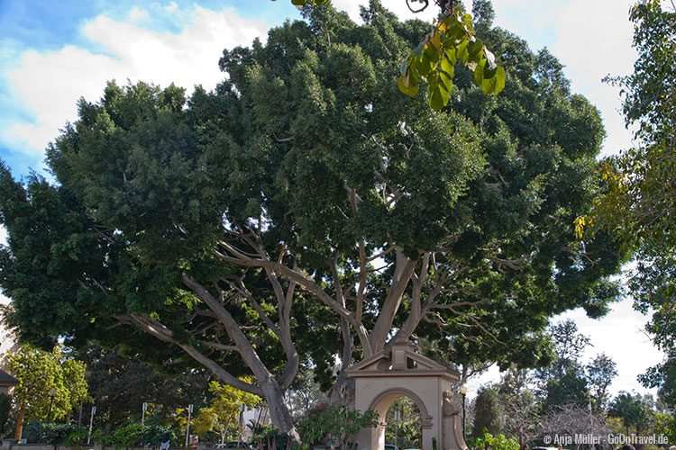 Baum im Balboa Park