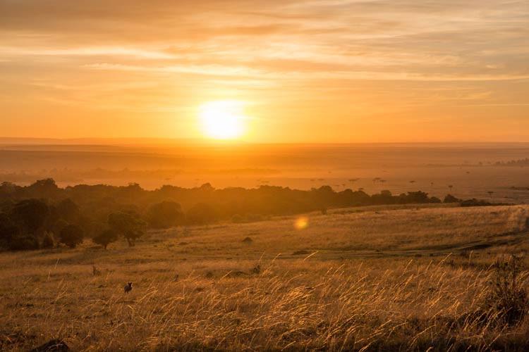 Sonnenaufgang in der Maasai Mara