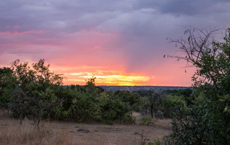 Sonnenuntergang mit Zebras in der Maasai Mara