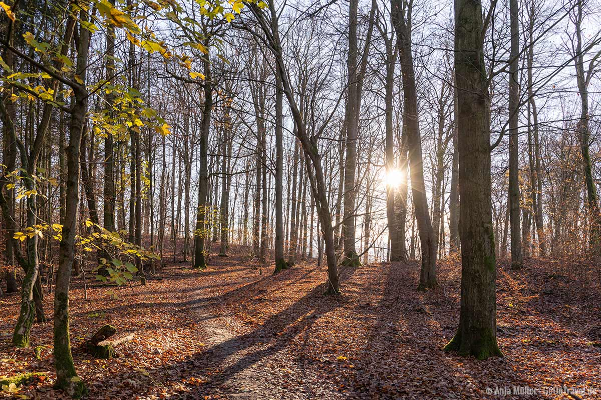Herbst im Grumsinser Forst