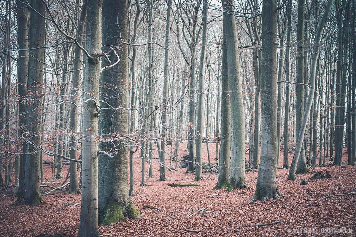 Der Urwald Grumsin im Spätherbst