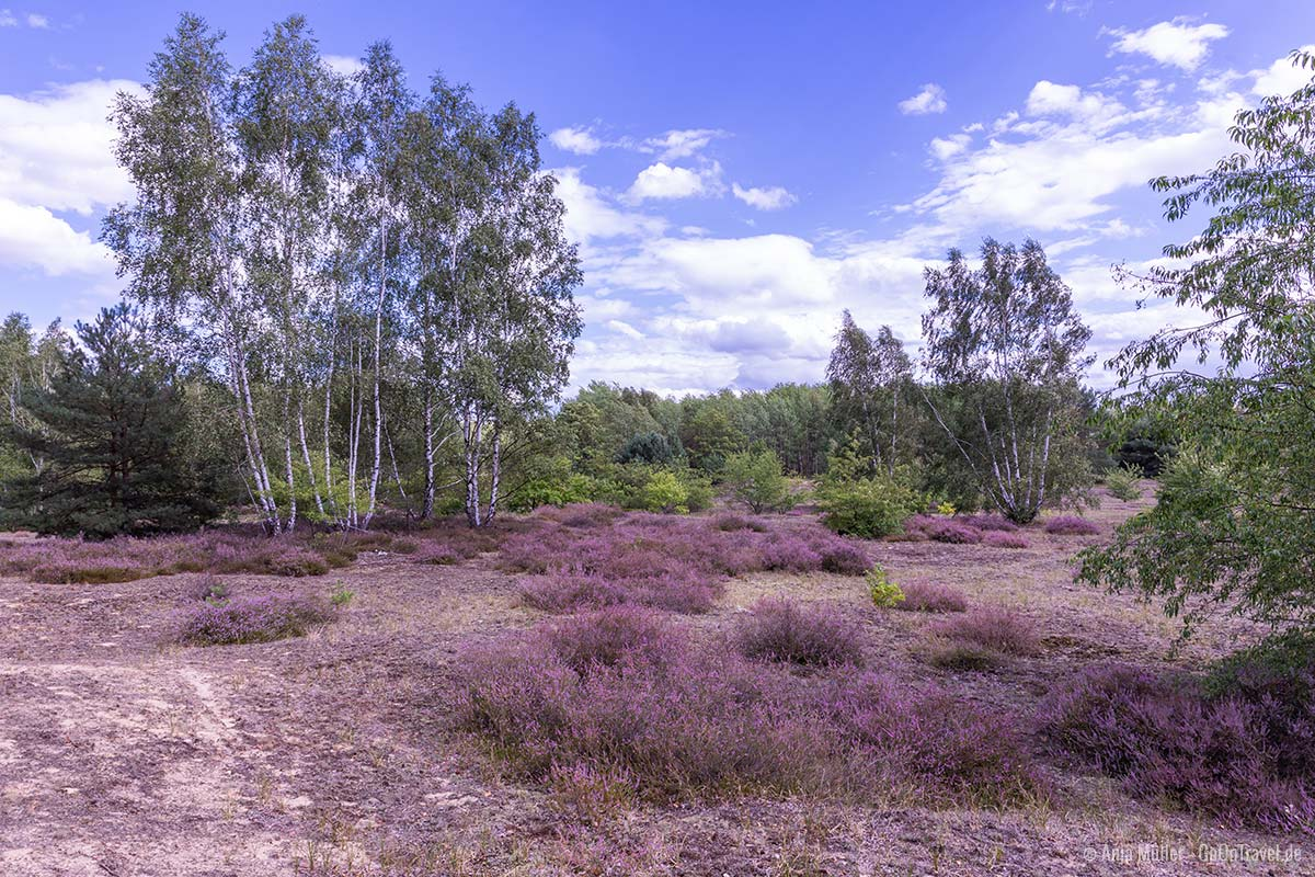 Hasenheide in der Döberitzer Heide