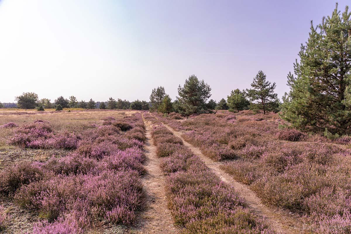Weg in der Jännersdorfer Heide
