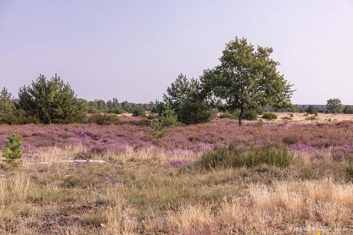 Jännersdorfer Heide