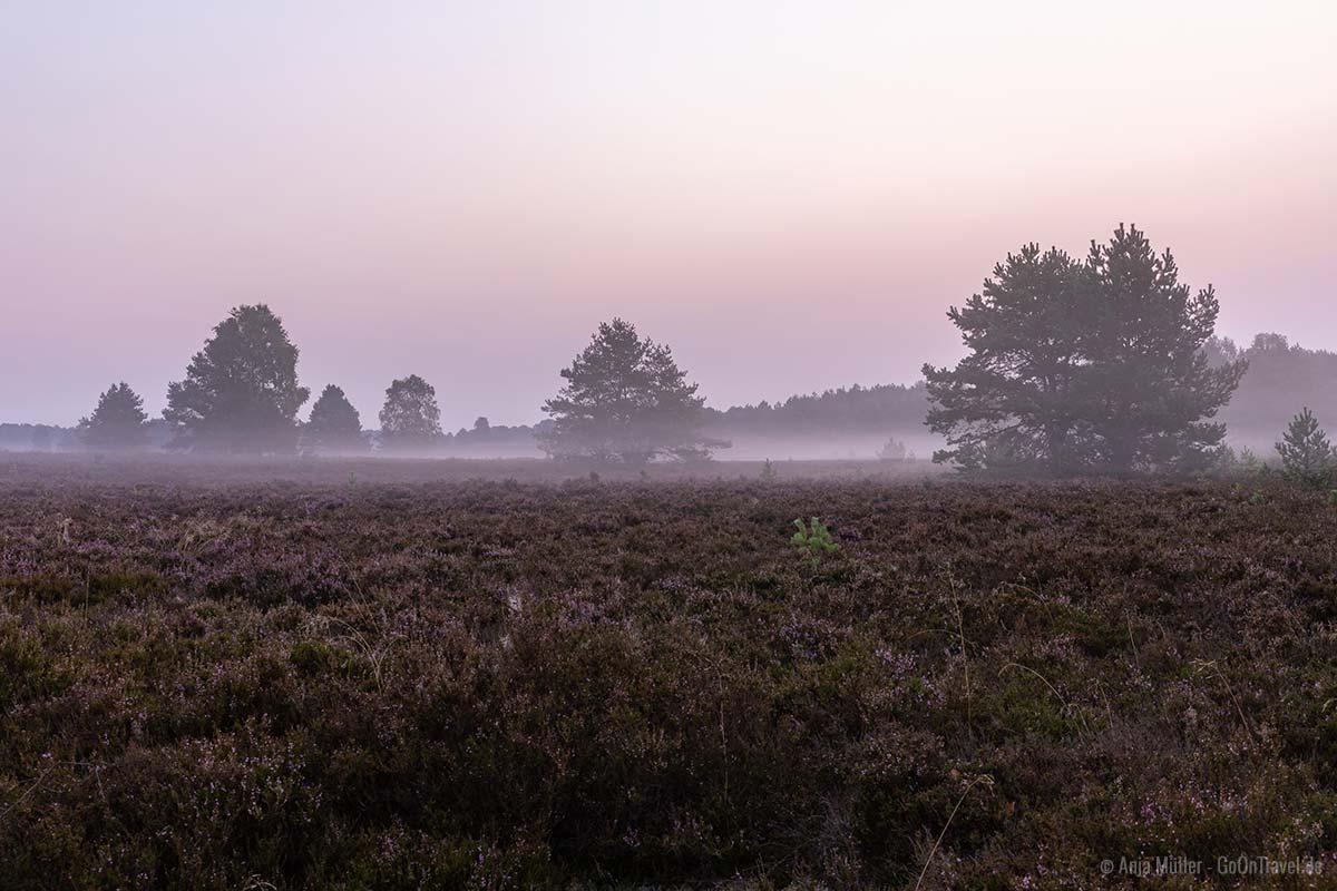 Morgennebel in der Kyritz-Ruppiner Heide