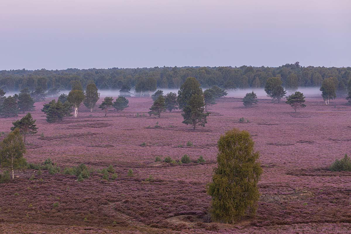 Kyritz-Ruppiner Heide im Morgennebel