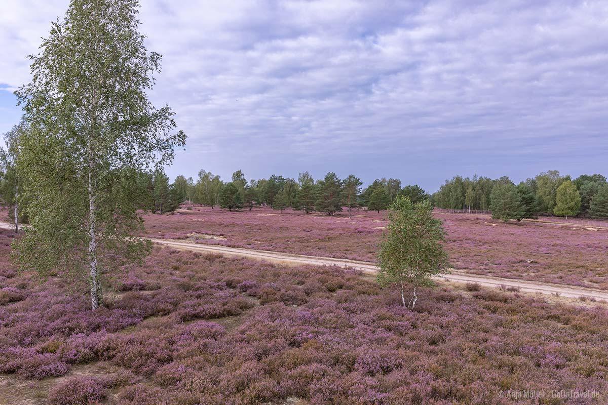 Blick auf die Reicherskreuzer Heide