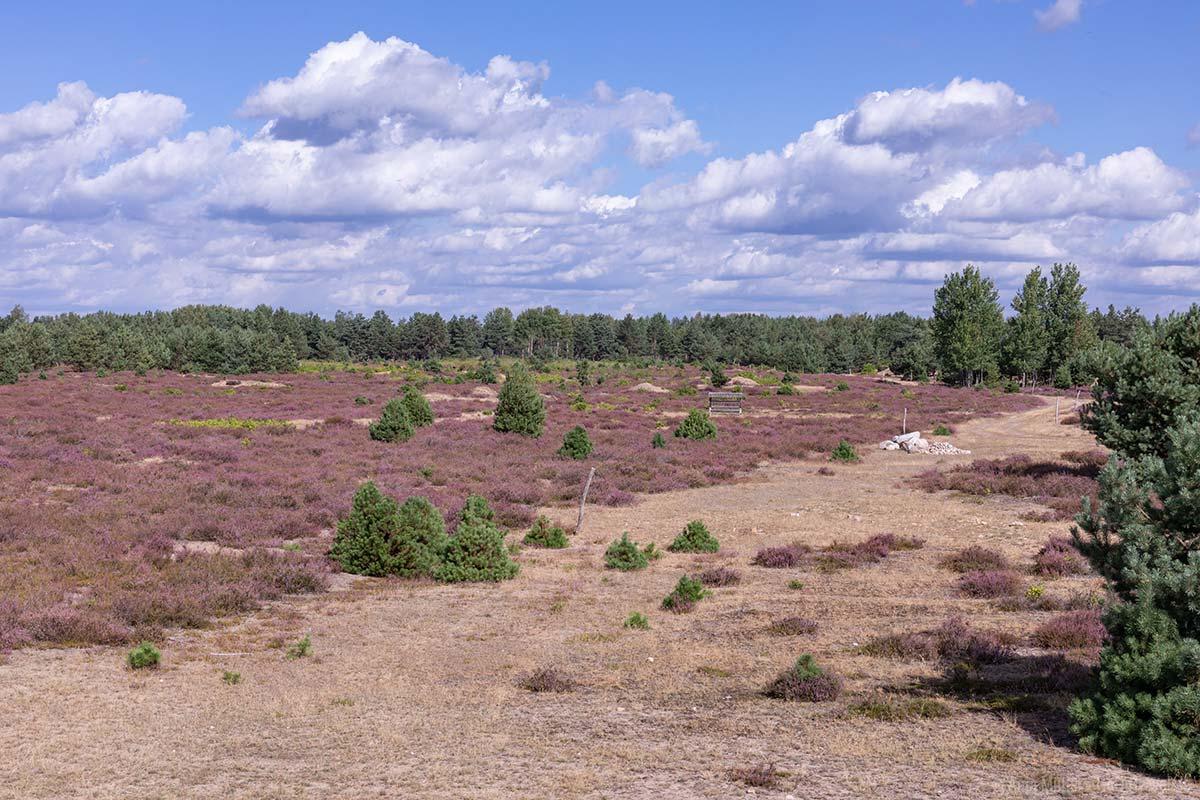 Aussichtspunkt in der Schönower Heide