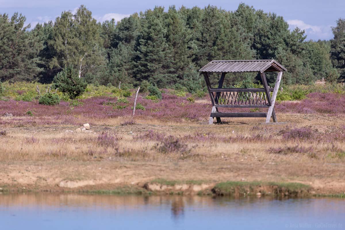Schönower Heide zur Heideblüte