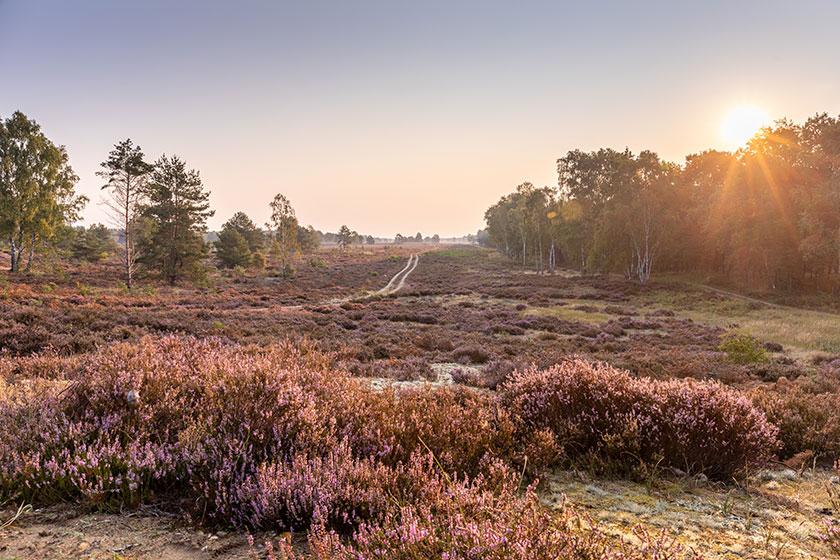 Heide in Brandenburg am Morgen