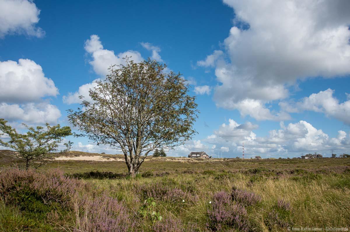 Naturschutzgebiet Morsumer Heide